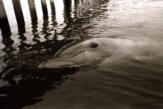 dolphin, sex, photographer, documentary , depression, separation, physical relationship