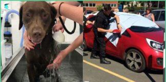 Police, Smash, Window, Rescue , Dogs, blazing, car