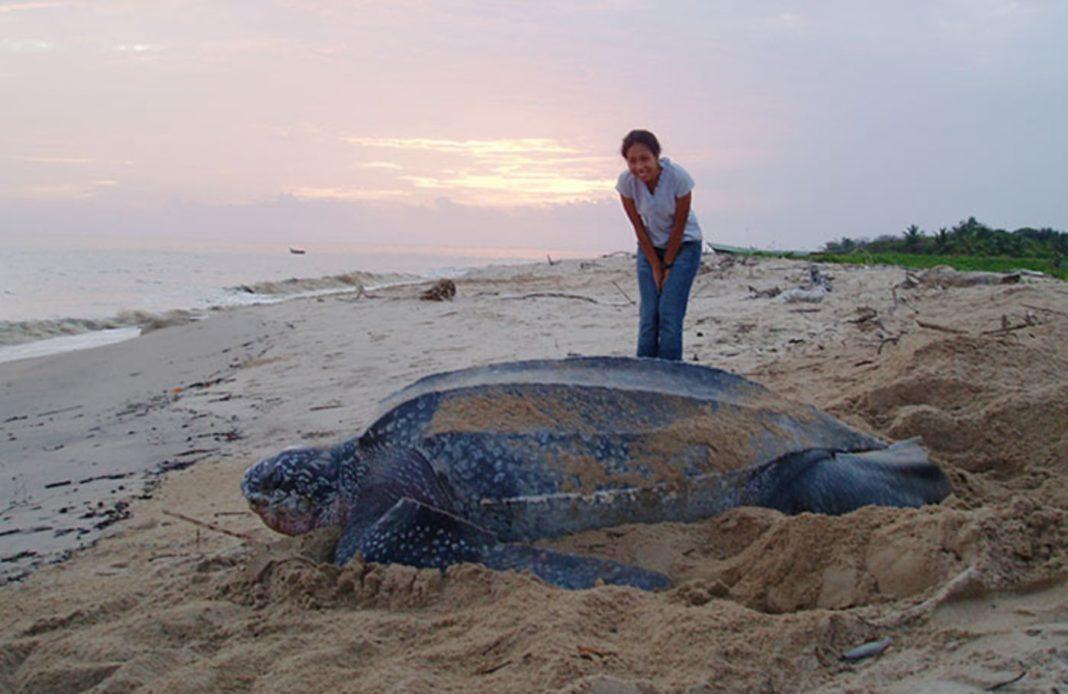 big things, comparison, bigger , blue whale heart, eagle talon, sea turtles, theemergingindia, Emerging, India
