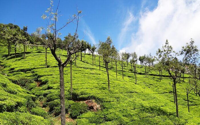tourist, places, India, traveling, Experiences, things, Shimla, Manali, Ooty, Goa,