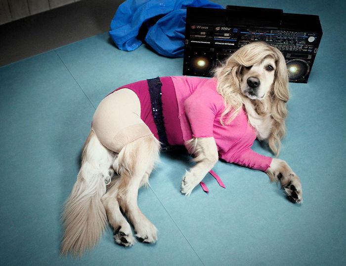 Dog, French, fashion photographer, Vincent Flouret, Paris, project heart