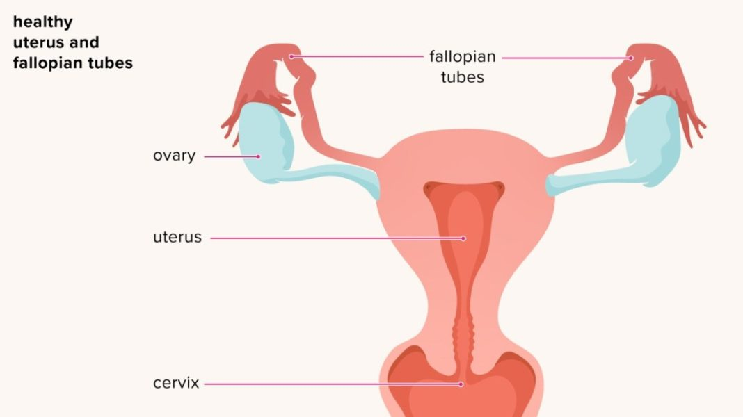 SEXUALLY TRANSMITTED DISEASES, VULVOVAGINITIS, OVARIAN CYSTS, PELVIC INFLAMMATORY DISEASE, ENDOMETRIOSIS AND ADENOMYOSIS, OVARIAN CANCER,