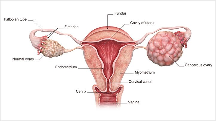 13 Diseases Of The Female Reproductive System Women Need To Know About